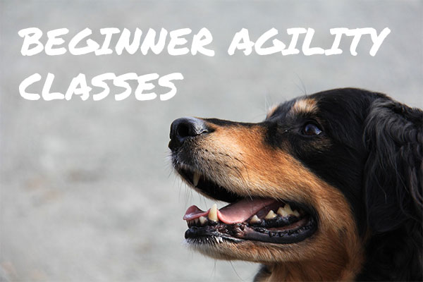 Learn more about beginner agility classes
